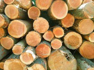 Legno Douglas, trattamento per legno, impregnante per legno, impermeabilizzante woodseal pro