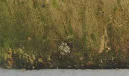 Alghe, muschio, legno non trattato, legno deterioramento
