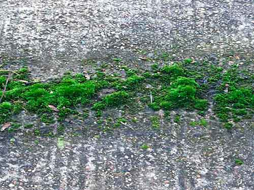anti alghe, anti muschio, protezione cemento, pietra, asfalto, proliferazione materiale organico