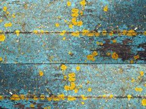 impermeabilizzante per pittura, anti alghe, anti muschio, depositi organici,