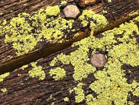 Legno, anti muffa, anti muschio, anti alghe, protezione depositi organici