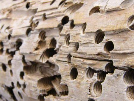 Legno, anti tarli, anti termiti, protezione, attacco di insetti